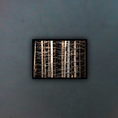 abstract-218471_fondo2.jpg