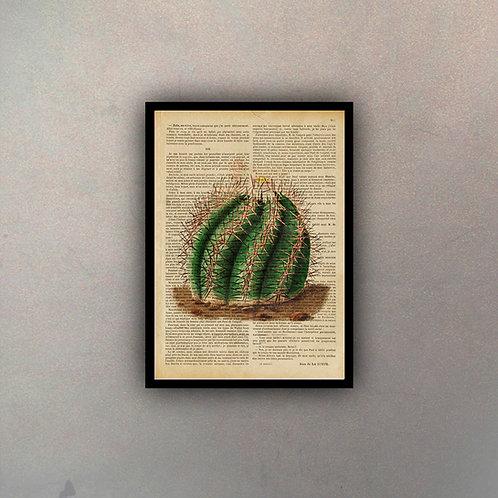Cactus Fondo Vintage