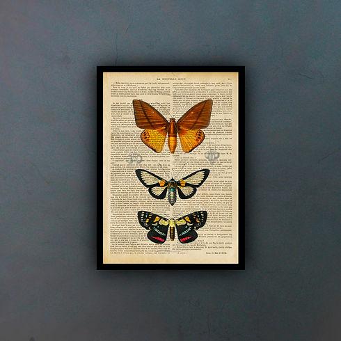butterflies2fondo.jpg