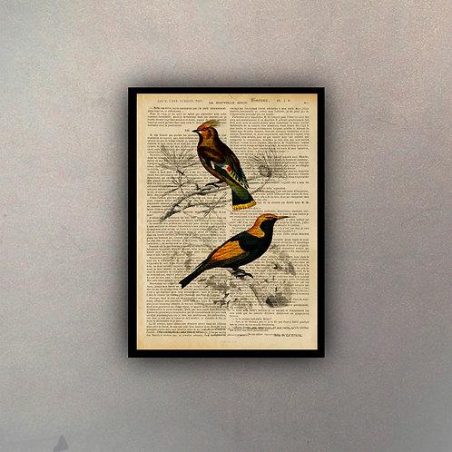Pájaros I Fondo Vintage