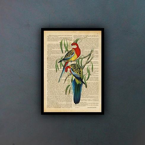 pájaroscoloridosfondo.jpg