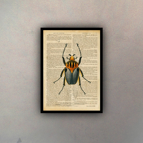 Insecto Fondo Vintage