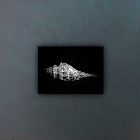 horse-conch-4905470-(1)1_fondo2.jpg