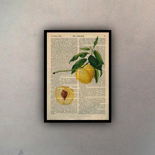 Frutos IV Fondo Vintage