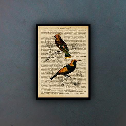 birds5fondo.jpg