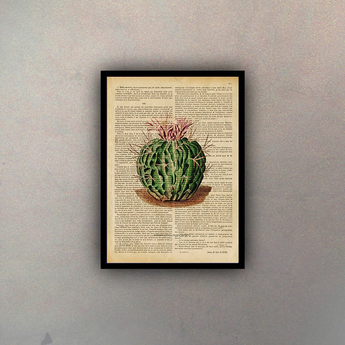 Cactus III Fondo Vintage