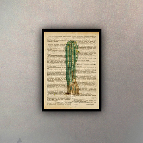 Cactus IV Fondo Vintage