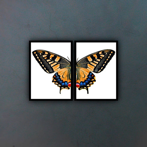 Díptico mariposa II fondo.jpg