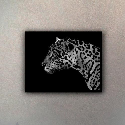 Jaguar Blanco & Negro