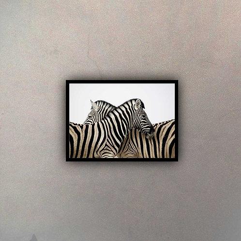 Dos Cebras