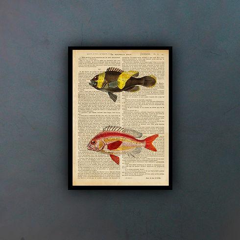fishfondo.jpg