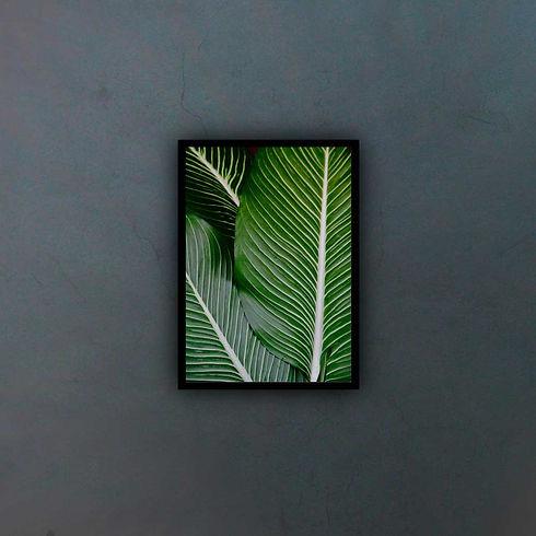 palm-11856771_fondo2.jpg