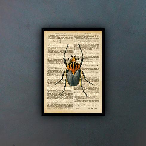 escarabajofondo.jpg