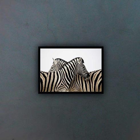 zebra-3834241-(1)_fondo2.jpg