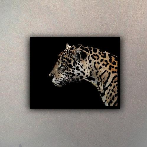 Jaguar Color