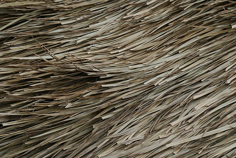 texturas palma.jpg