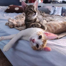 Lalo y Lolo