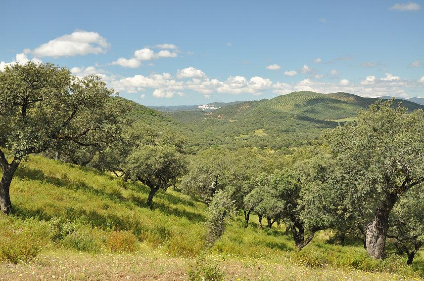 Sierra de aracena y picos de arche1.jpg