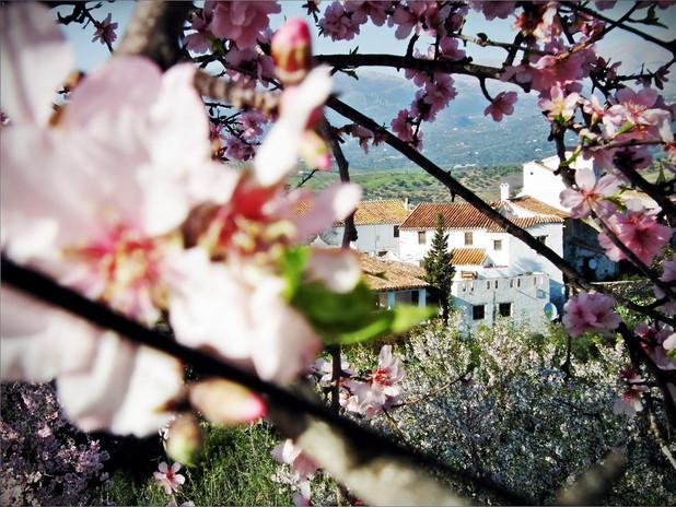 spring-in-Castillejos-Retreat.jpg