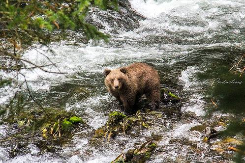 Interview with a Bear Cub