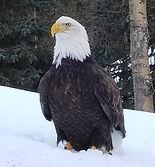 Mascot Bald Eagle, Earl