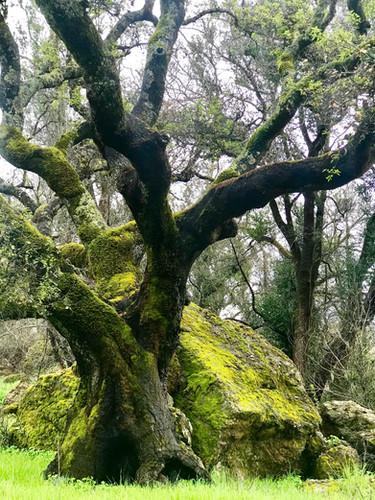 tree-rock.jpg