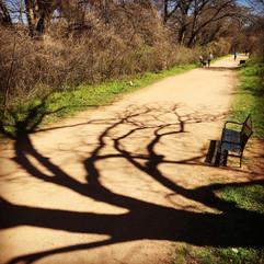 PrintReady-24x24-Square-SHADOW-Tree1.jpg