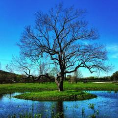 PrintReady-24x24-Square-FLOWER-TREES-Wil