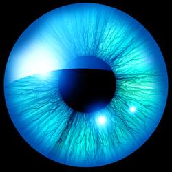 dreamstime_xxl_35104341--blue iris w black background