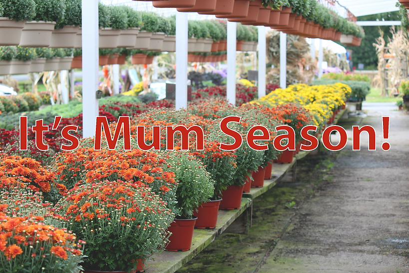 Its mum season.png