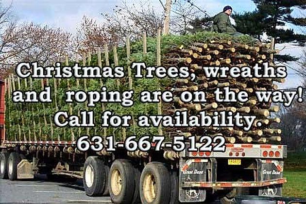trees-on-the-truck-450x300_edited.jpg