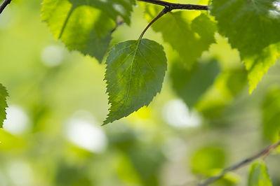green-color-1365975_1920.jpg