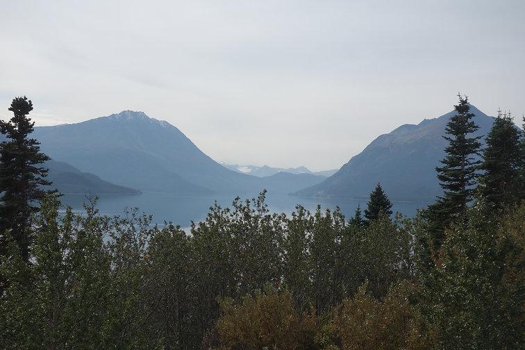 Mountain Forest_Alaska.jpg