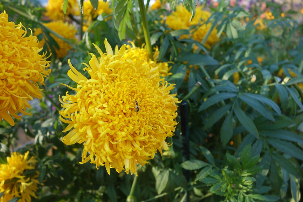 Flower_yellow.jpg