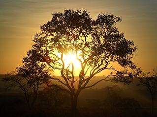 tree-1784750_1920.jpg