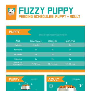 FEEDING SCHEDULE: Puppy to Adult
