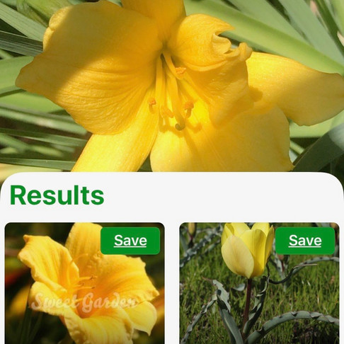 Magical Plant Identifier Apps!