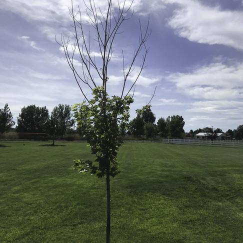 Tree Tissue Damage