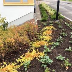 Plantering av växter Bostadsgård Hässelby