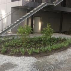 Projekt - plantering på bostadsgård Sollentuna