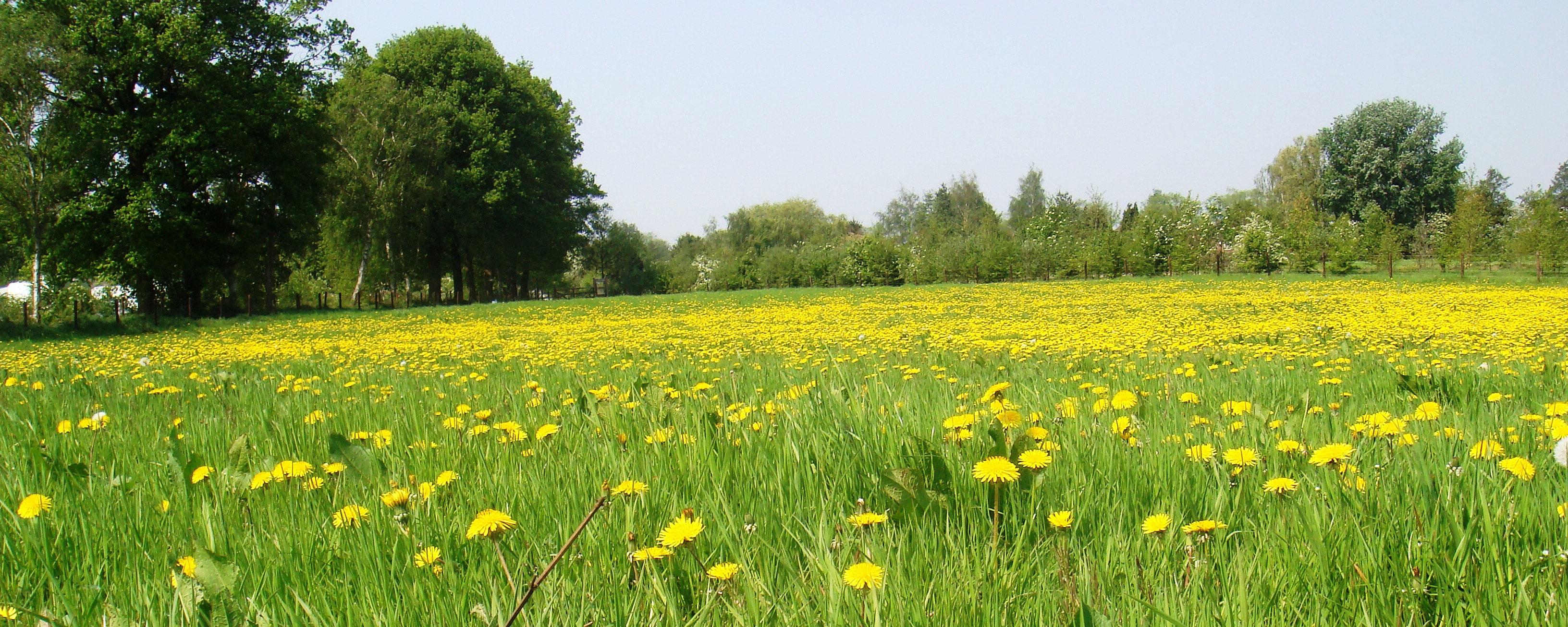 Landschapscamping De Graspol / Grasland Recreatie / Noord ...