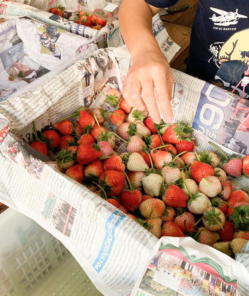 Chew Green Strawberries