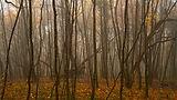 Installation No.1 - Woods : Mist.jpg