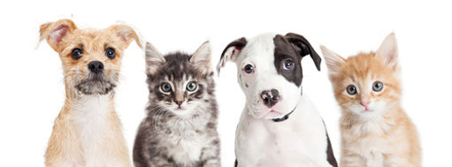 New rules for selling or giving away dogs and cats in NSW | Sentient