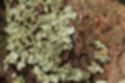 Mt Tamborine_02.03.18 (69).JPG