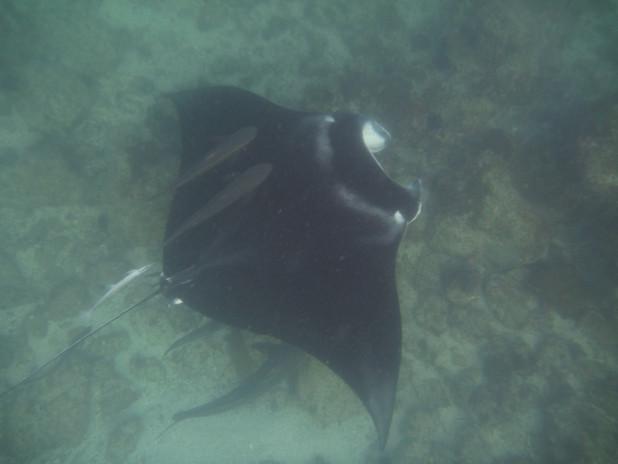 Snorkling 028.JPG