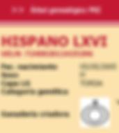 Bloedlijnen Cartujano Hispano LXVI