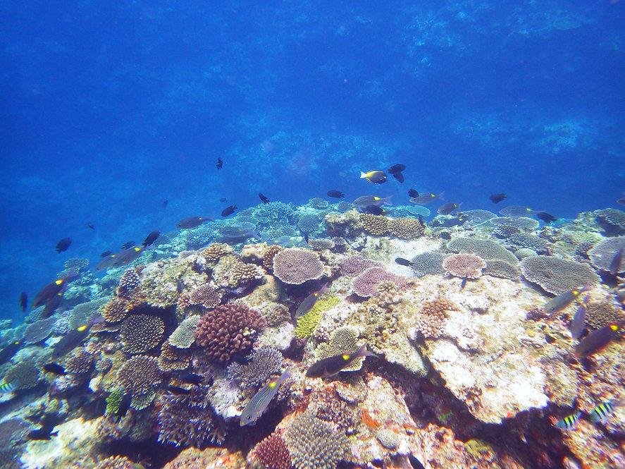 beach picnic 沖縄の魚