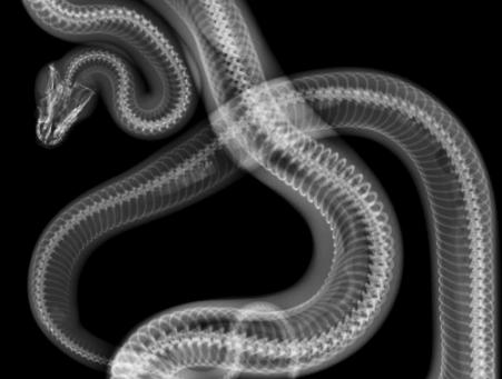 LUIGI DE ANGELIS, FANNY & ALEXANDER, HUBERT WESTKEMPER  | змея – The Riot Of Seduction