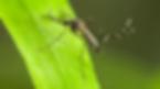 cambio-climático-insectos.png